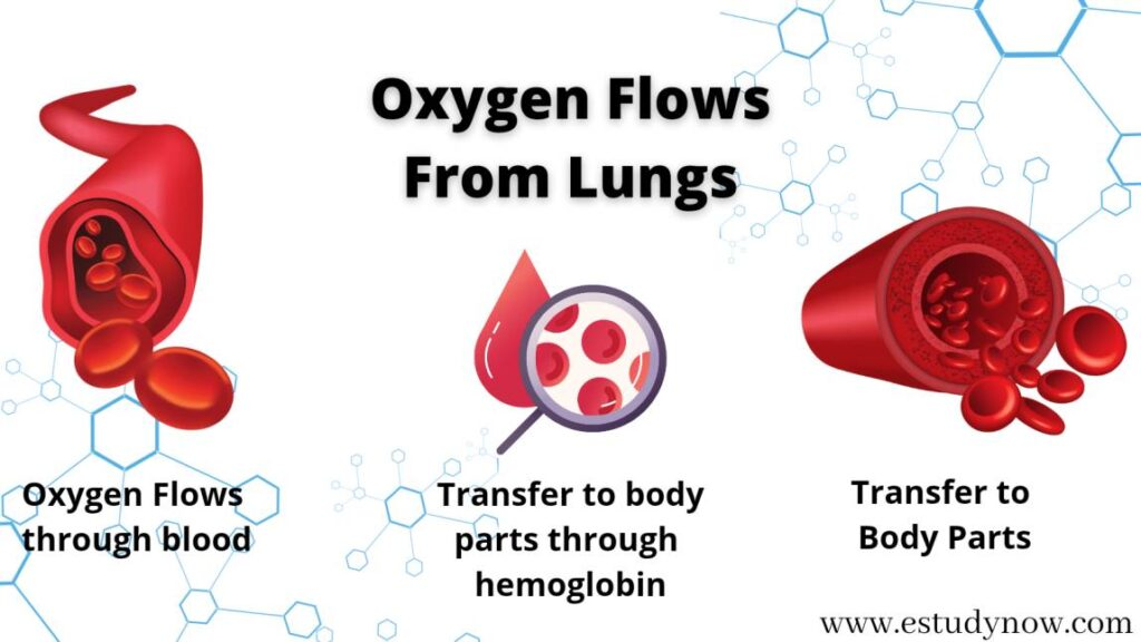 what is oxygen level how to increase at home in the body blood